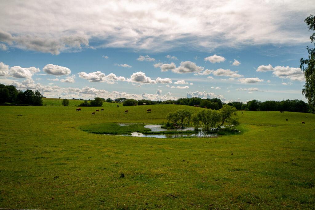 Natur og landskabs fotografering