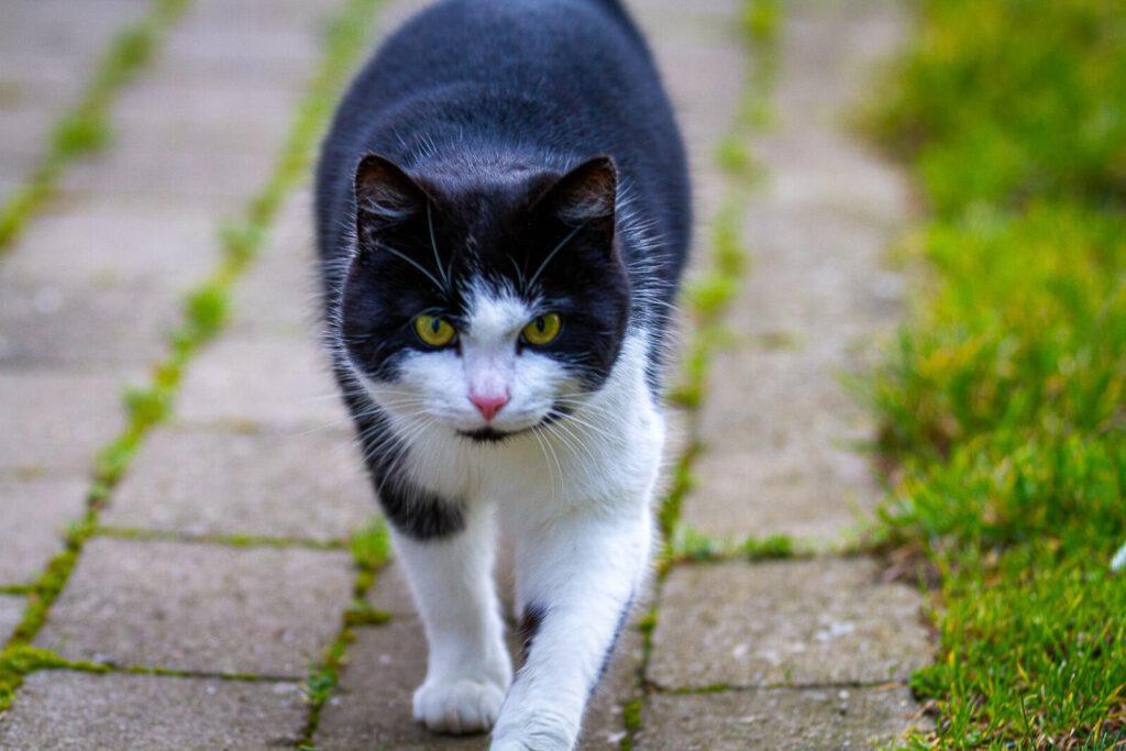Katte fotografering - SCPhoto