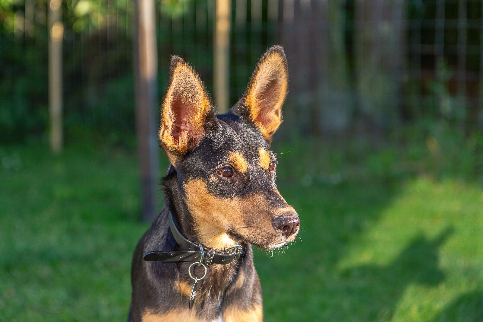 Hunde fotograf i Slagelse