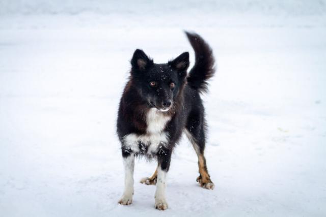 Hundefotografering i sne