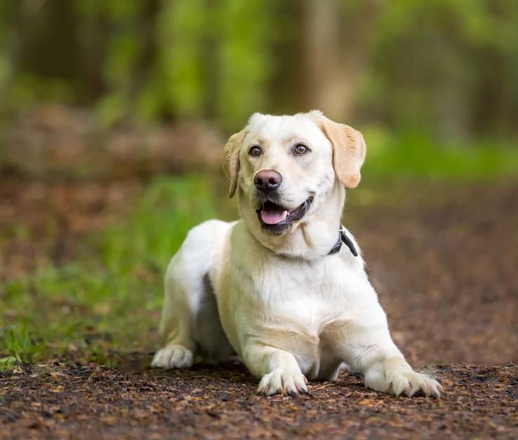 hundefotografering